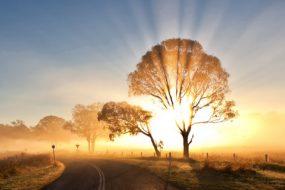 morning-mist-wallpapers-198